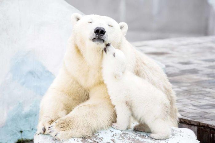 Любовь и заботу может получить любое существо на земле.