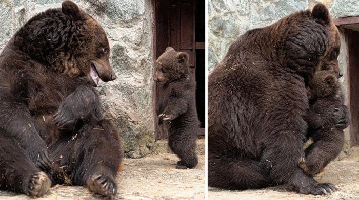 Медвежонок прощен мамой и с него снято наказание.