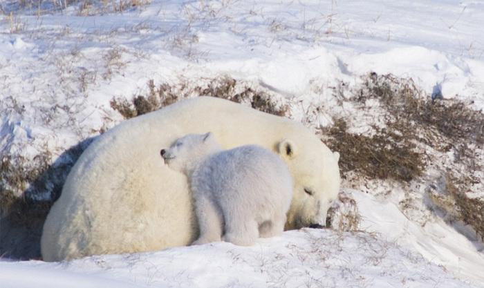 Семейство спит, свернувшись калачиком под бугорочком.
