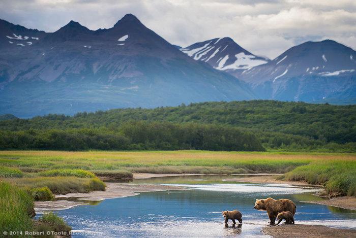 Великолепный вид на горы, озеро и четвероногих друзей.