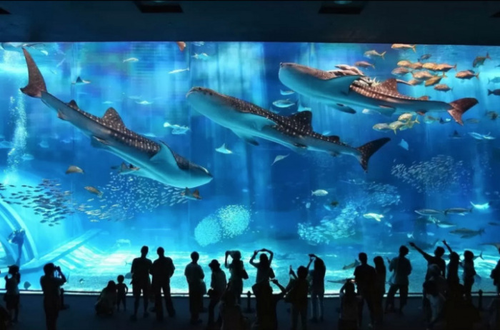 Один из самых больших аквариумов в мире, открытый в 2002 году, на японском острове Окинава.