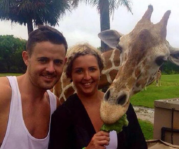 Пара хотела сфотографироваться на фоне стада жирафов, но один из них неожиданно присоединился к ним, Орландо, штат Флорида, США.