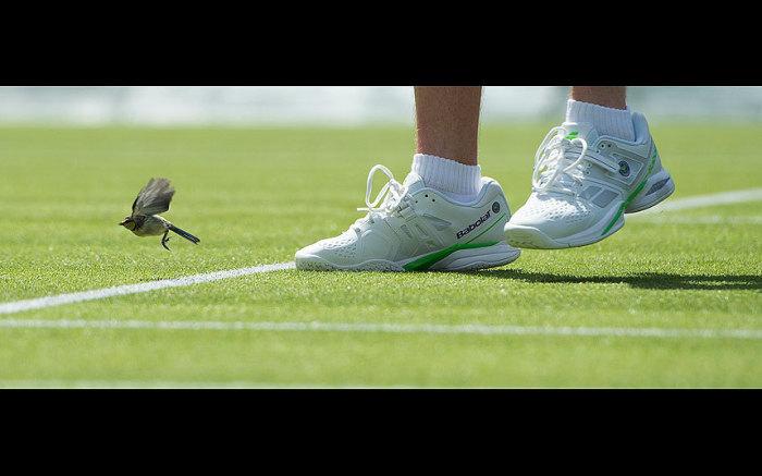 Сербский теннисист прогоняет с поля лазоревку во время матча в Лондоне.
