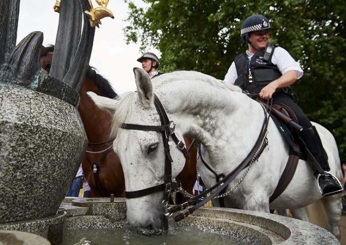 Лошадь конной полиции пьёт воду из фонтана в Грин-парке, Лондон, Англия.