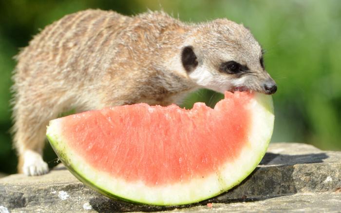 Удивительные фотографии животных, обитающих на планете.