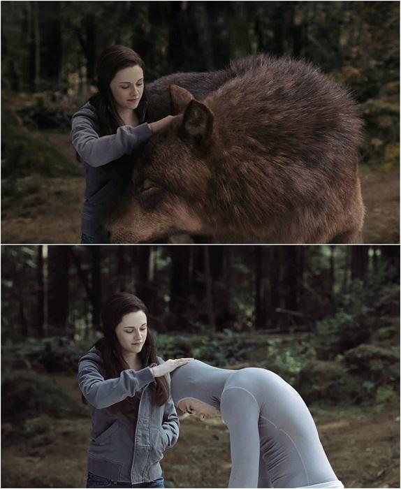 Белла стоит рядом с Джейкобом-волком и гладит его.