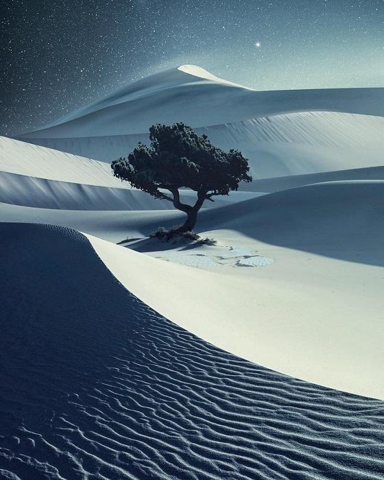 Необычно и одиноко смотрится дерево с зелеными листьями на фоне пейзажа пустыни.
