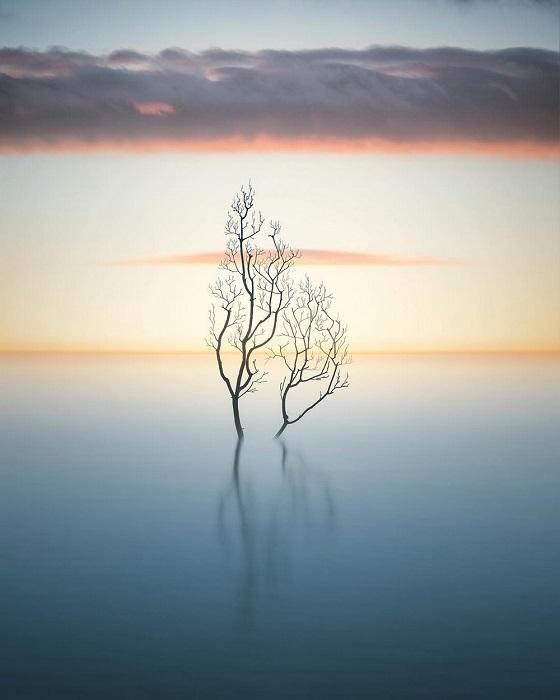 Изящная ветка одиноко стоящая в заливе.