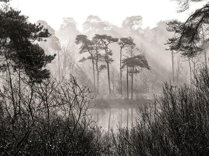 Лес Оистервейксе, Нидерланды. Фотограф: Andrew George.