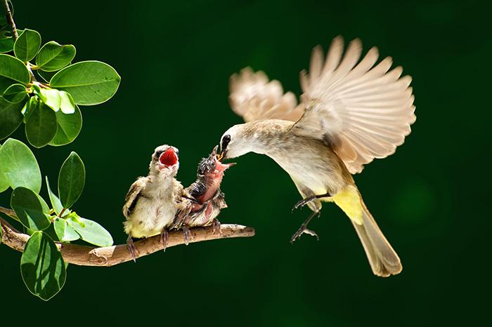 Повседневная жизнь птиц у которых есть птенцы.