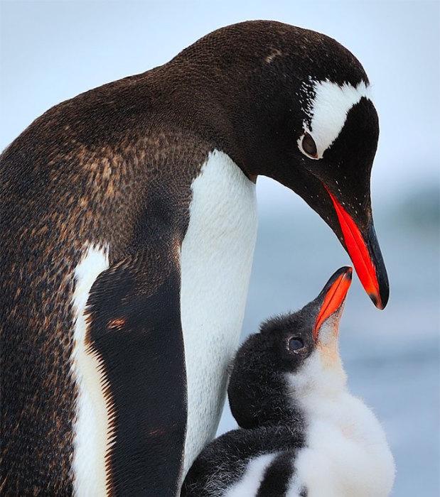 Материнская любовь присуща не только людям.