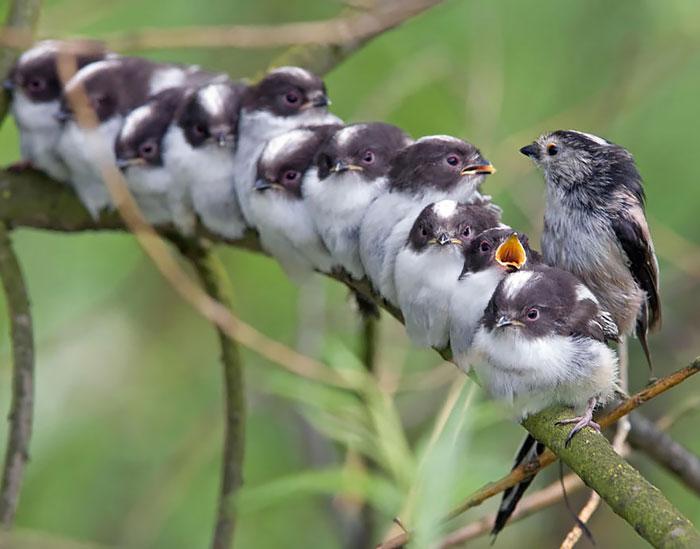 Птичьи обнимашки.