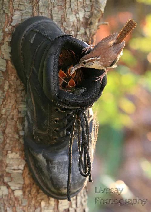 Гнездо в ботинке.