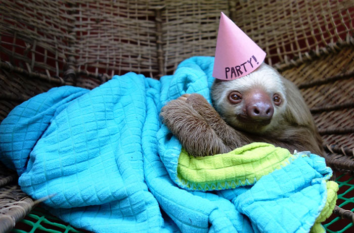 Хочу просто в свой день рождения укутаться в плед и слушать шум дождя.