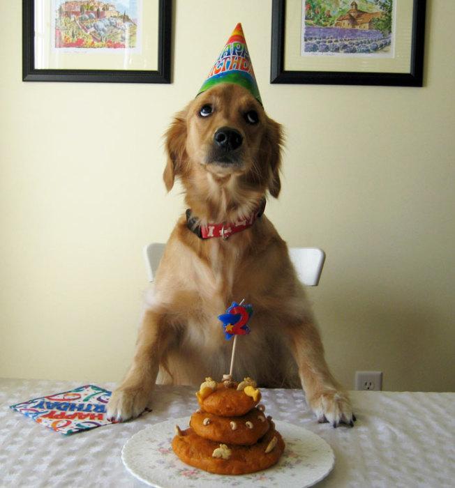 Это же пирожки, а не торт!
