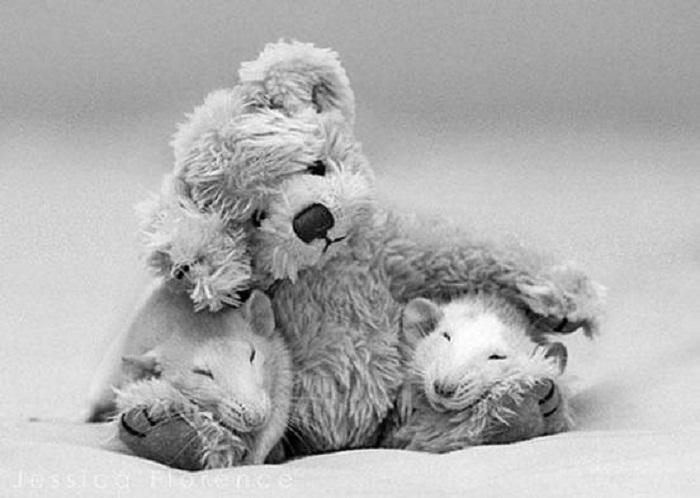 Как маленькие дети, любят спать со своими мягкими игрушками.