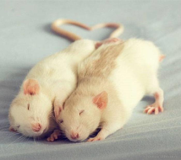 Мышиные хвостики сплелись в форме сердца - это так мило.