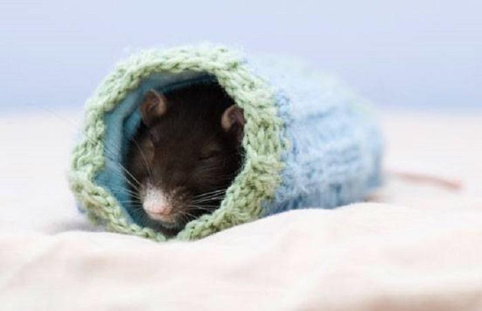 Я, мышка-норушка, а ты кто?