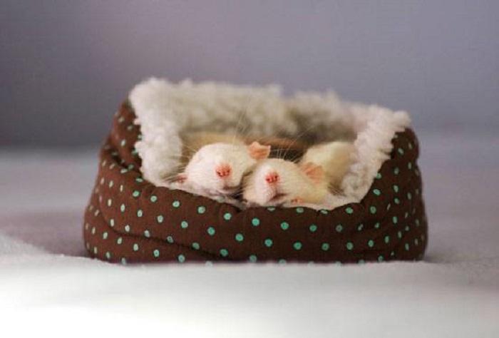 Интеллигентные мыши спят в своем домике.
