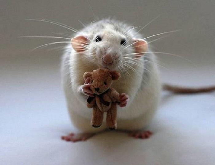 Очаровательная мышь держит в лапках плюшевого мишку.