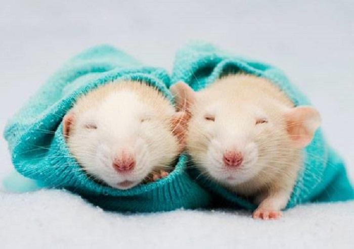 Дружелюбные домашние питомцы, тихонечко посапывая, спят в вязаных носочках.