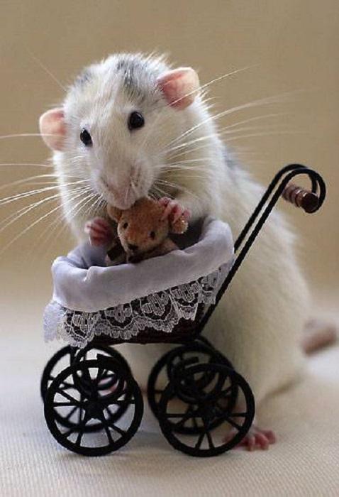 Мышка стоит на задних лапах возле игрушечной коляски.