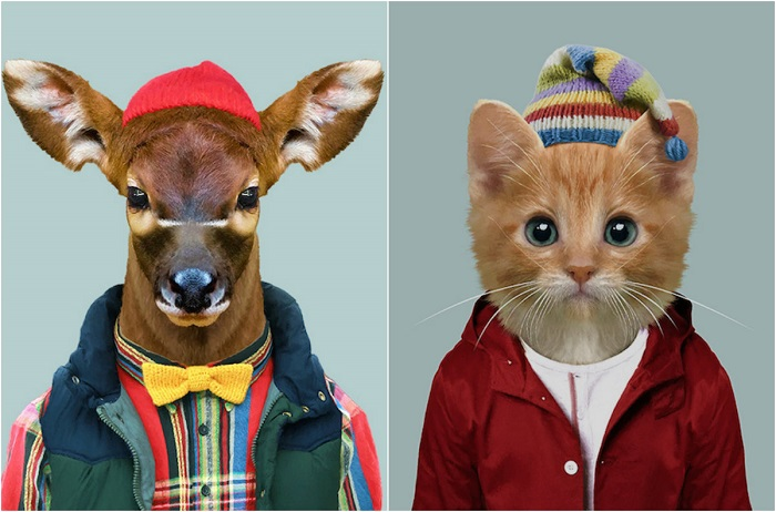Самые модные животные.