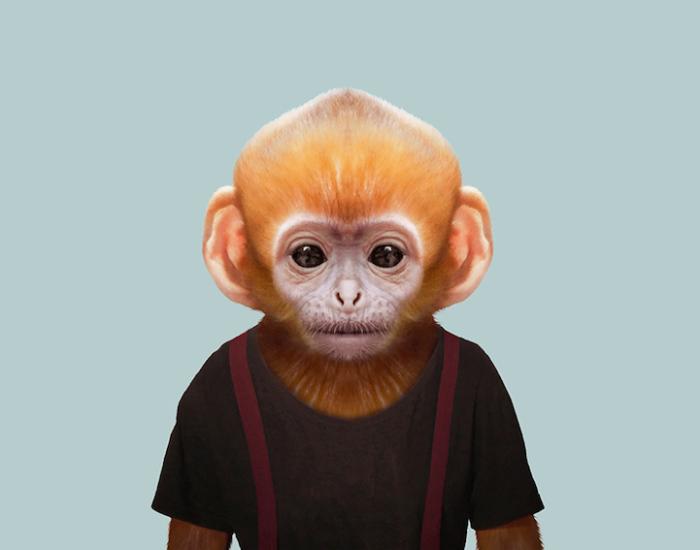 Одна из самых маленьких обезьян.