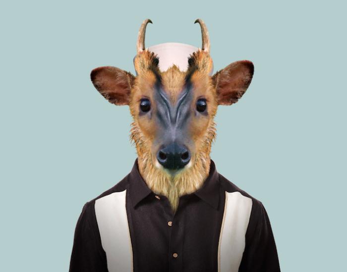 Своим поведением больше напоминает собаку, чем представителя семейства оленевых.