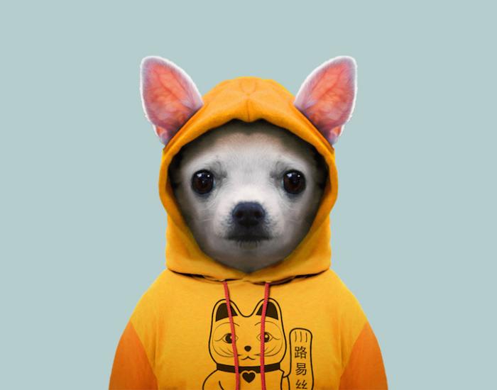 Самая маленькая порода собак.