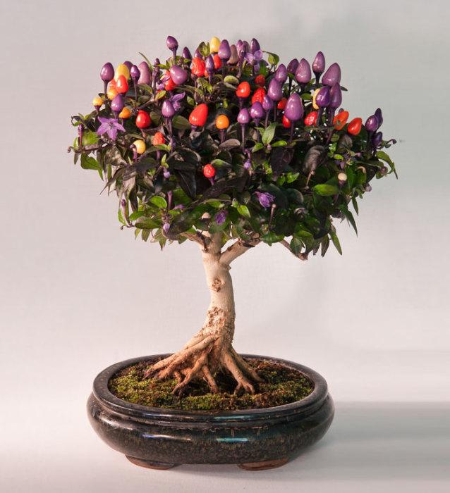 Красивое миниатюрное дерево.