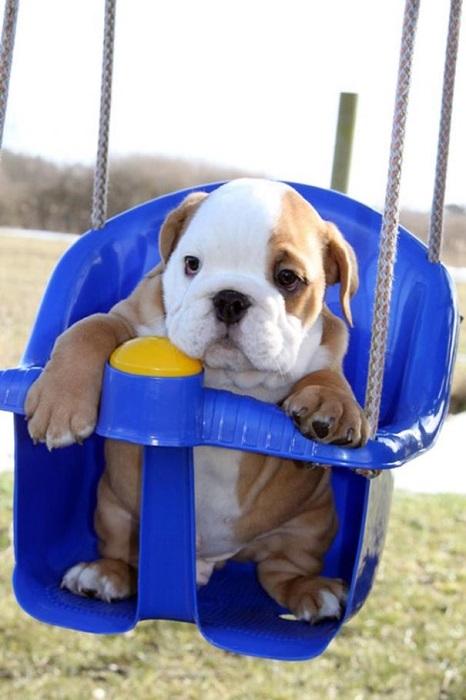 Я маленький и тоже хочу кататься.