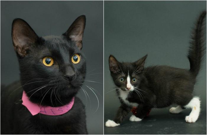 Удивительные и мистические чёрные кошки.