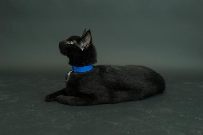 Кошка, обладающая своей собственной неповторимой индивидуальностью.