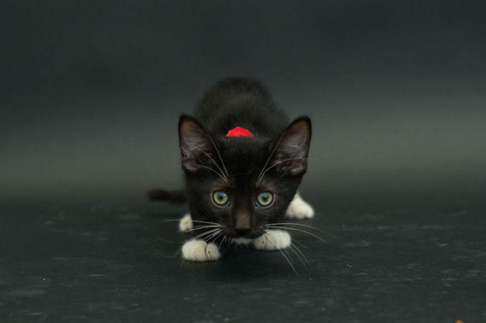 Милый и притягательный котёнок.