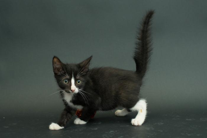 Несчастный черный котёнок остался в приюте из-за своего чёрного цвета.