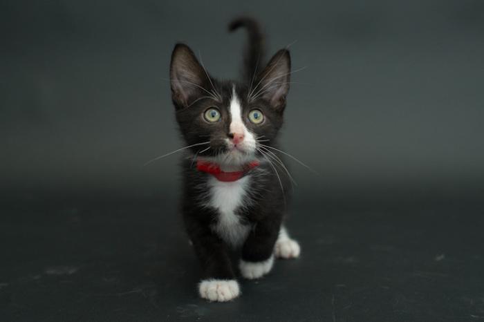 «Говорят, не повезет, если черный кот дорогу перейдет! А пока наоборот – только черному коту и не везет»!