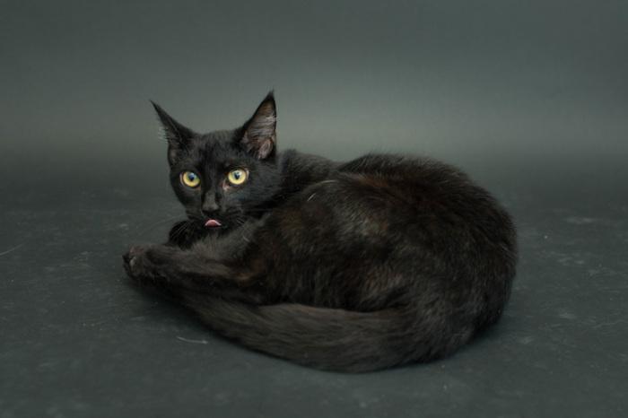На самом деле чёрные кошки не страшные и не опасные.