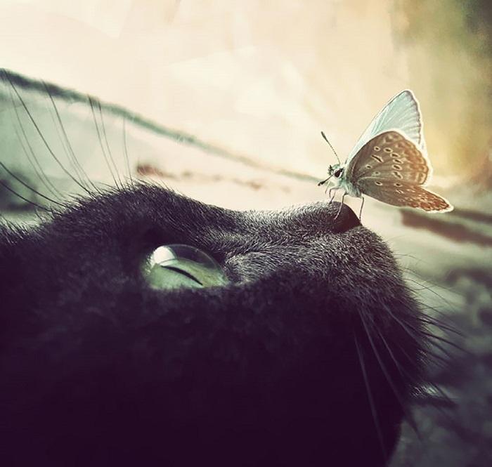 Бабочка отдыхает на тёплом носу у котика.
