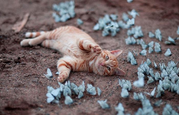 Бабочки, как развлечение для кота.