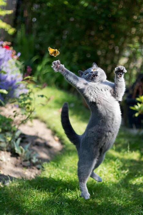 Занятное развлечние для кота.