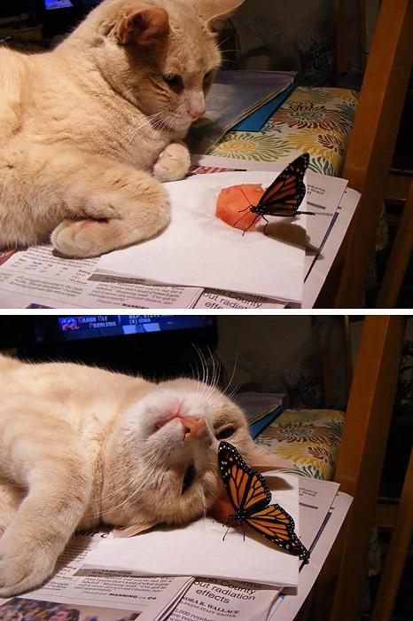 Реакция кота на бабочку.