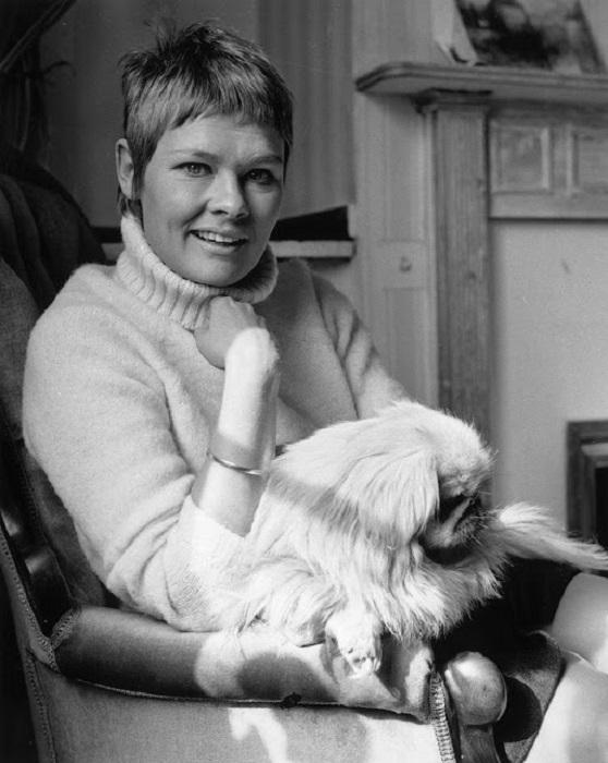 Британская актриса в домашней обстановке с любимцем мопсом.