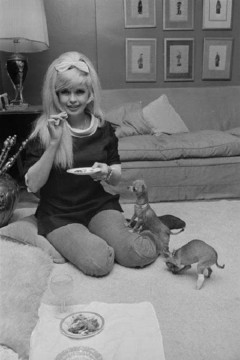 Американская киноактриса в гостиничном номере с любимцами чихуахуа, Лондон, 10 апреля 1967 года.