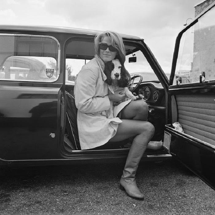 Британская актриса в автомобиле с любимцем спаниелем.