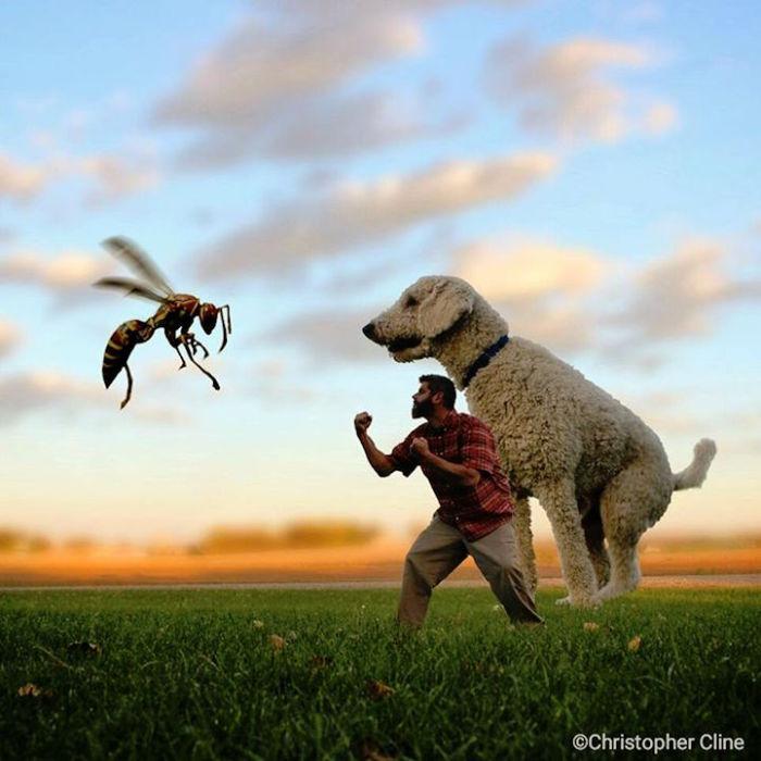 Кристофер пытается защитить пса от осы.