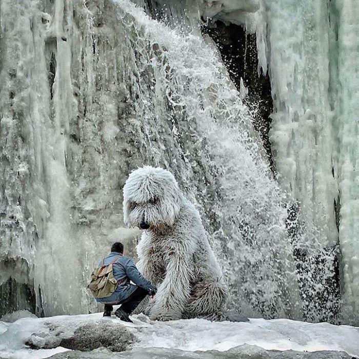 Схожесть тающего льда и лохматого белого пса.