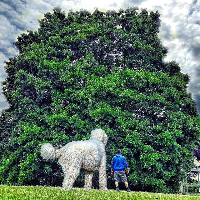 Кристофер с псом любуются громадным деревом.