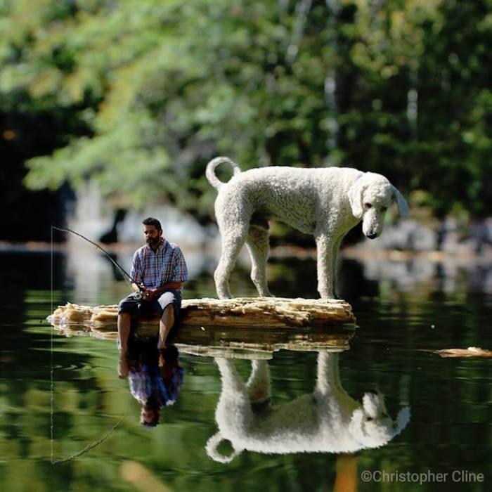 Пёс в ожидании рыбки.