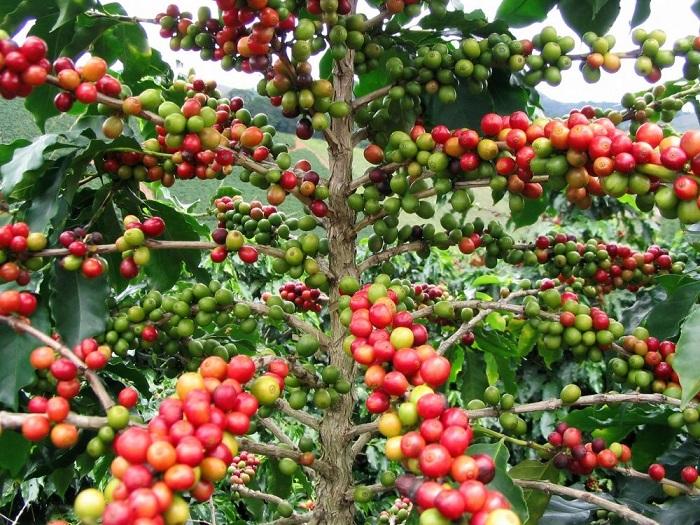 Виды популярных растений до попадания на полки супермаркетов.
